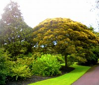 royal botanic garden w