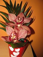 kwiat cymbidium