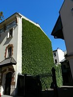 Green wall in Crakow...