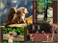 zoo wroclaw